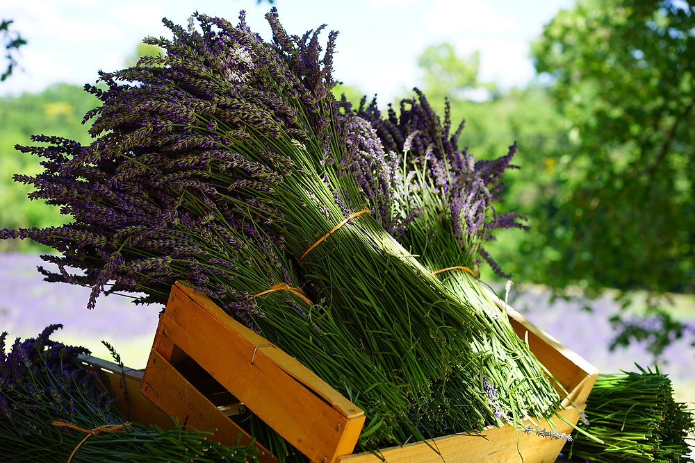 Lavender for soothing stress