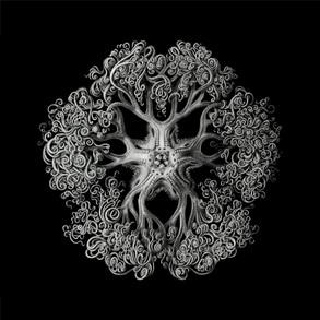 Lagardere / Nightish Nature / Original & Beatless Mix
