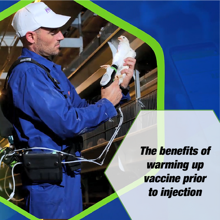 The benefits of warming up the vaccine prior to injection
