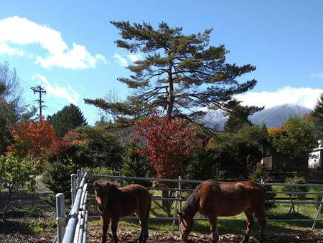 馬肥ゆる秋