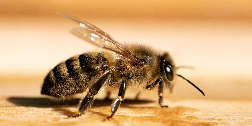 Meet the Bees experience         1 hour