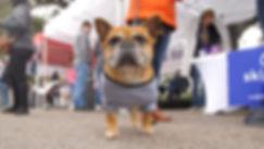 DogPop.01_26_09_04.Still021.jpg