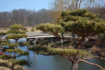 Japanese Gardens at the Chicago Botanic Gardens