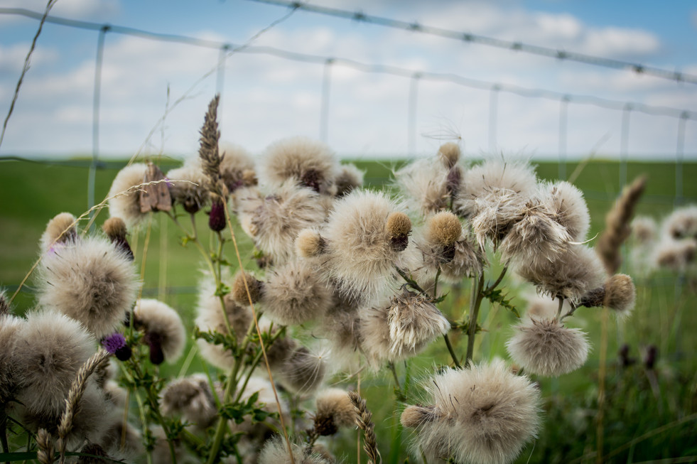 Fields near Stonehenge