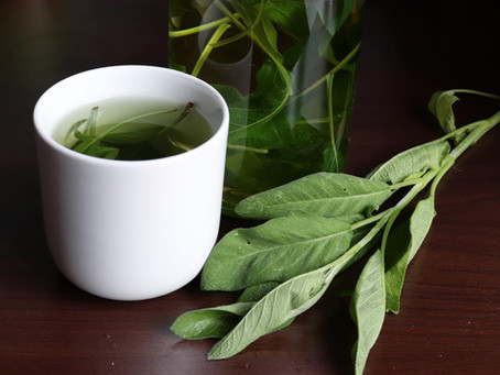 Šajvějový čaj