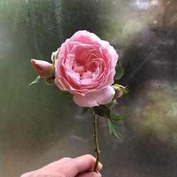 October #roses #lunablooms #localflowers #ctgrown