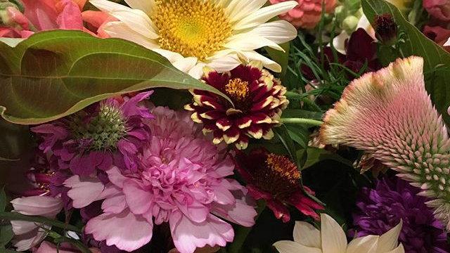 Biweekly Blooms