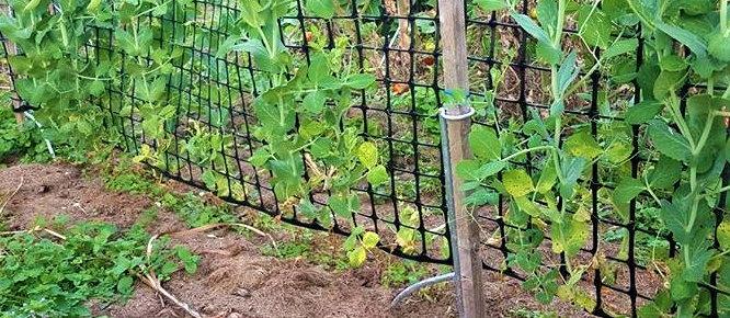 EASY STAKE - Pea & Bean Fence Kit