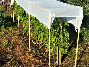 Easy stake garden