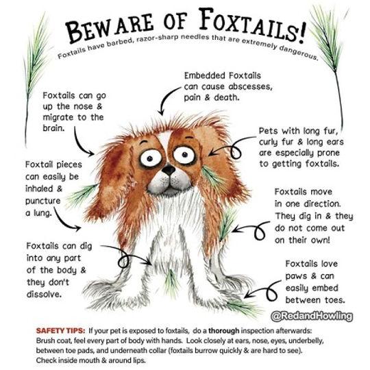 Fox tails.jpg