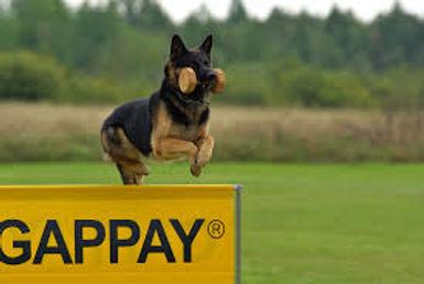German Shepherd2.jpg