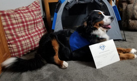 Barli earned her Therapy Dog Title!