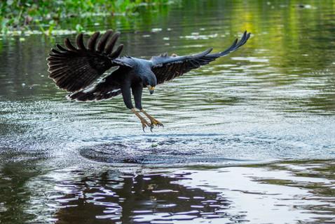 PANTANAL - Exuberância da fauna brasileira (Pantanal - Brazilian Astonishing Wild Life)