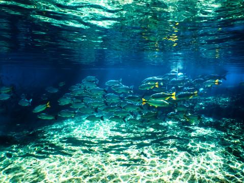 Sob as águas - Entre rios e mares (UNDERWATER)