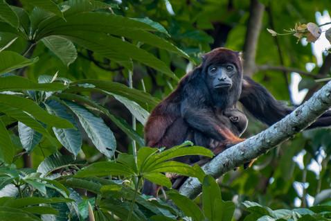 Transição Amazônica - Do Pantanal norte ao sul da Amazônia pelos rios Teles Pires e Cristalino. (Amazon)