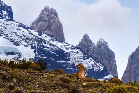 PATAGONIA - Terra dos Ventos e dos Glaciares - (Winds and Glaciers)