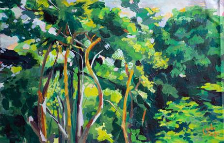Amador Landscape