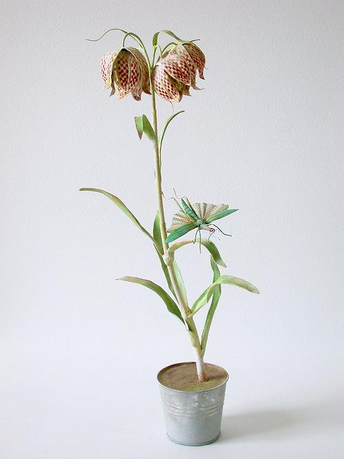 Checkered Fritillaria