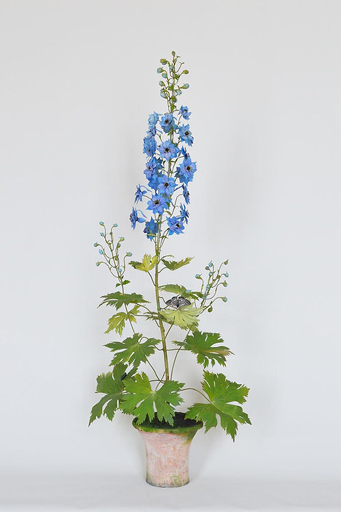 Blue Violet Delphinium