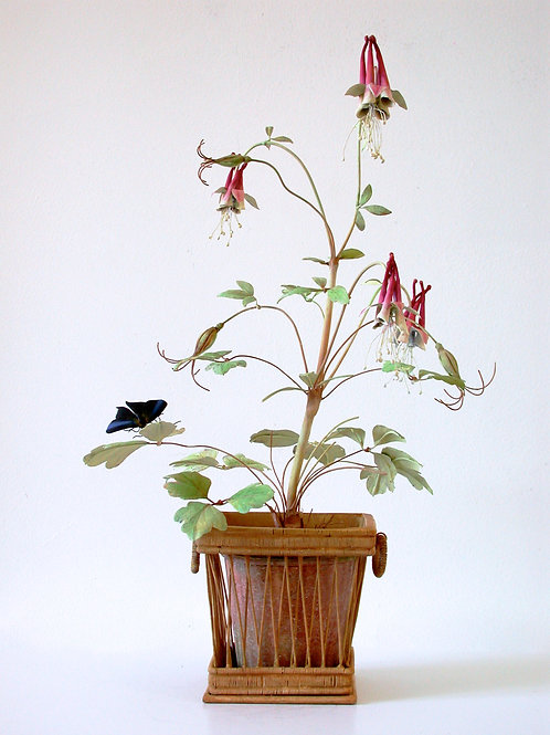 Columbine in a basket