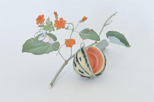 Brookshaw Melon