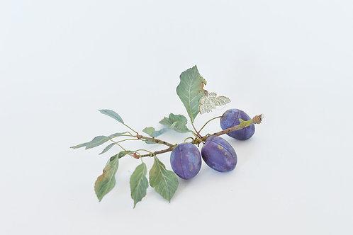 Purple Plums