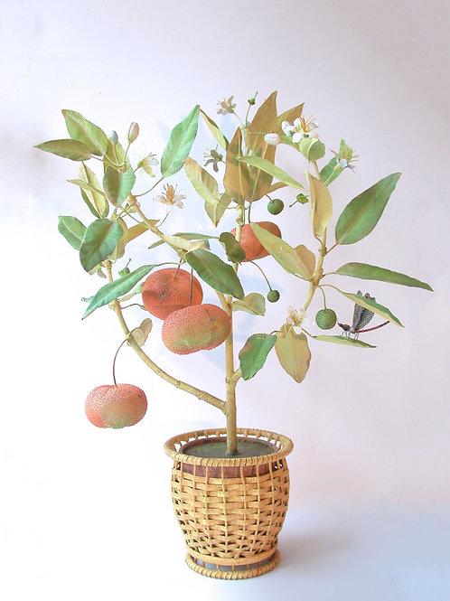 Orange Tree in a basket