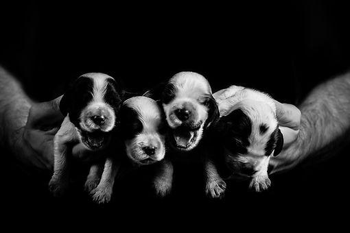 Newborn pet-32.jpg