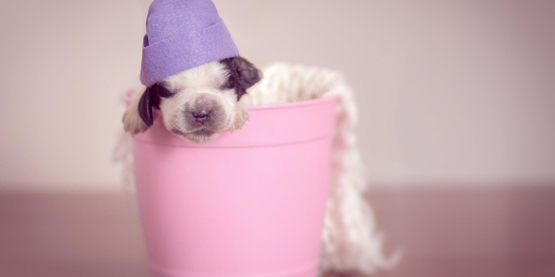 Newborn pet-10.jpg