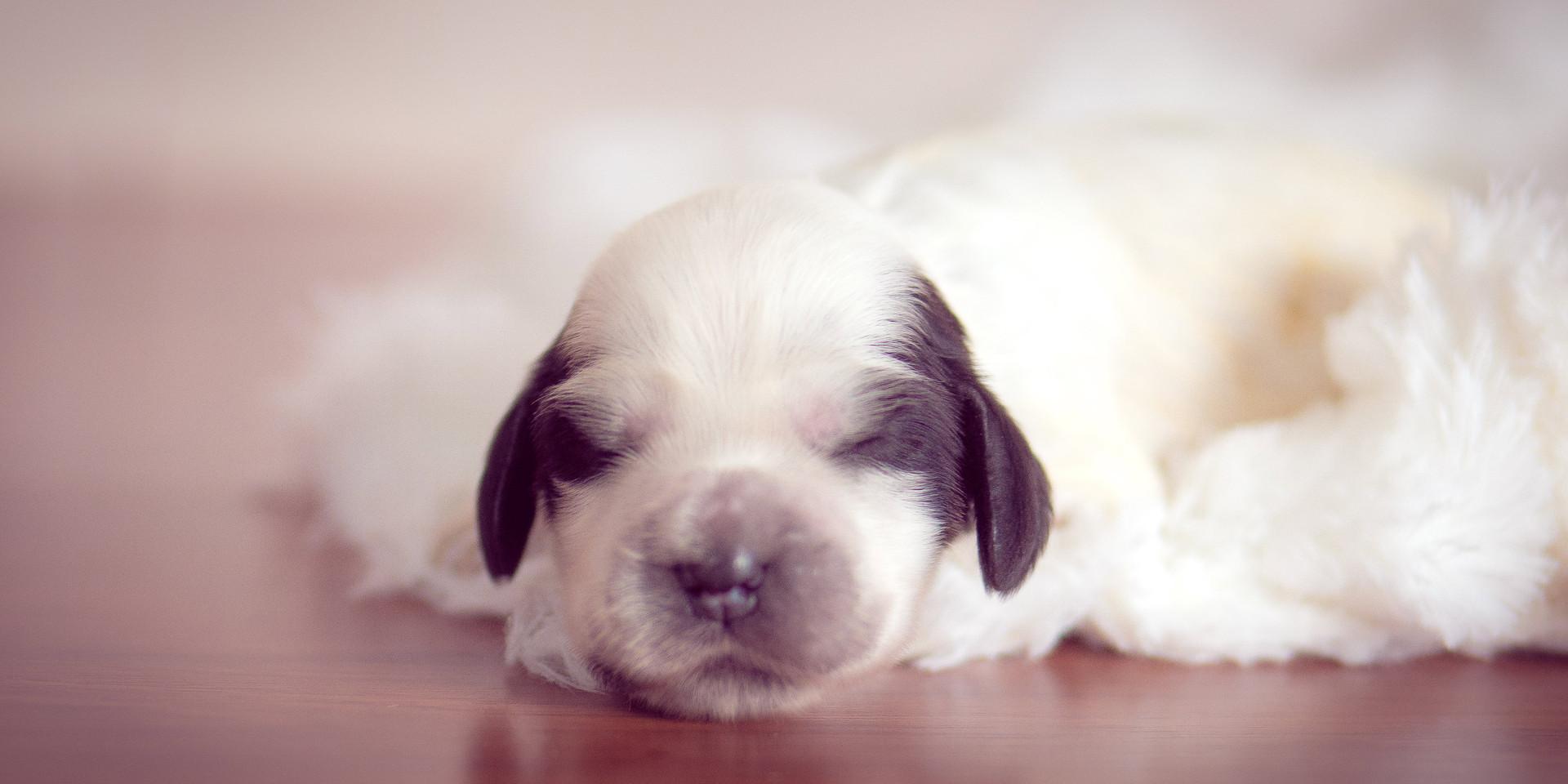 Newborn pet-19.jpg