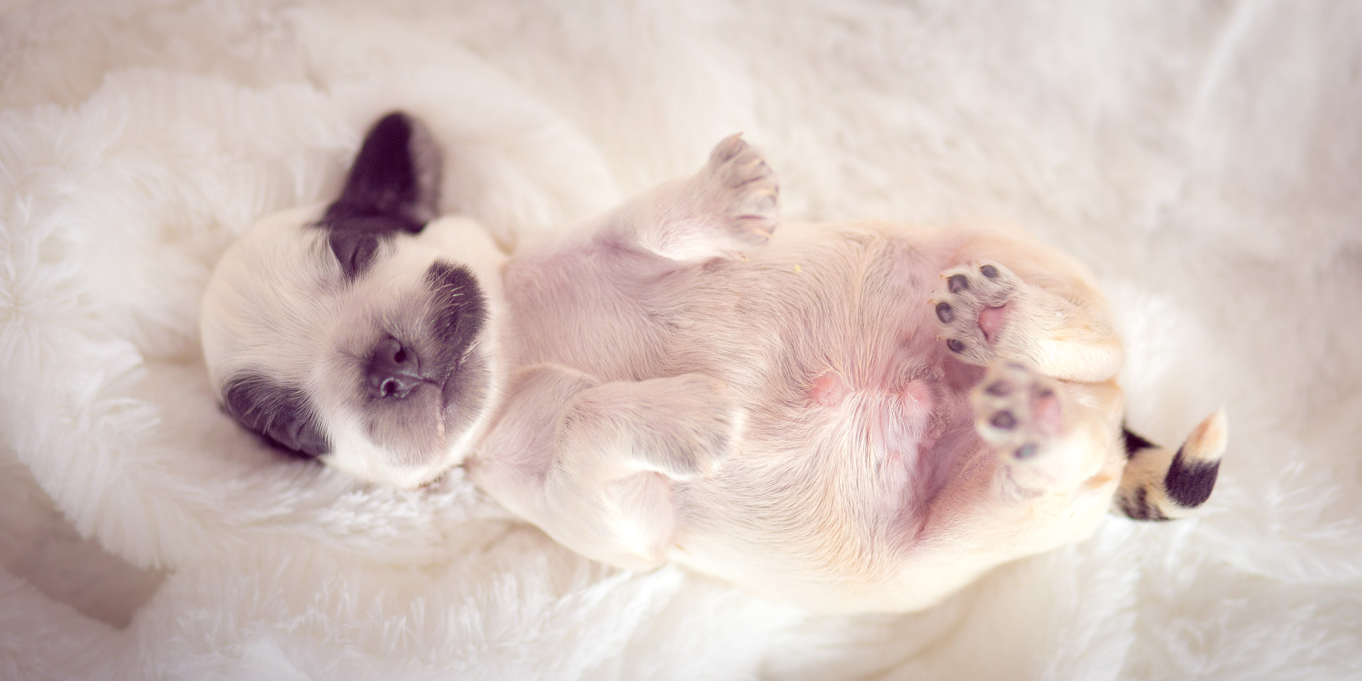 Newborn pet-16.jpg