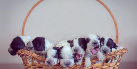 Newborn pet-2.jpg