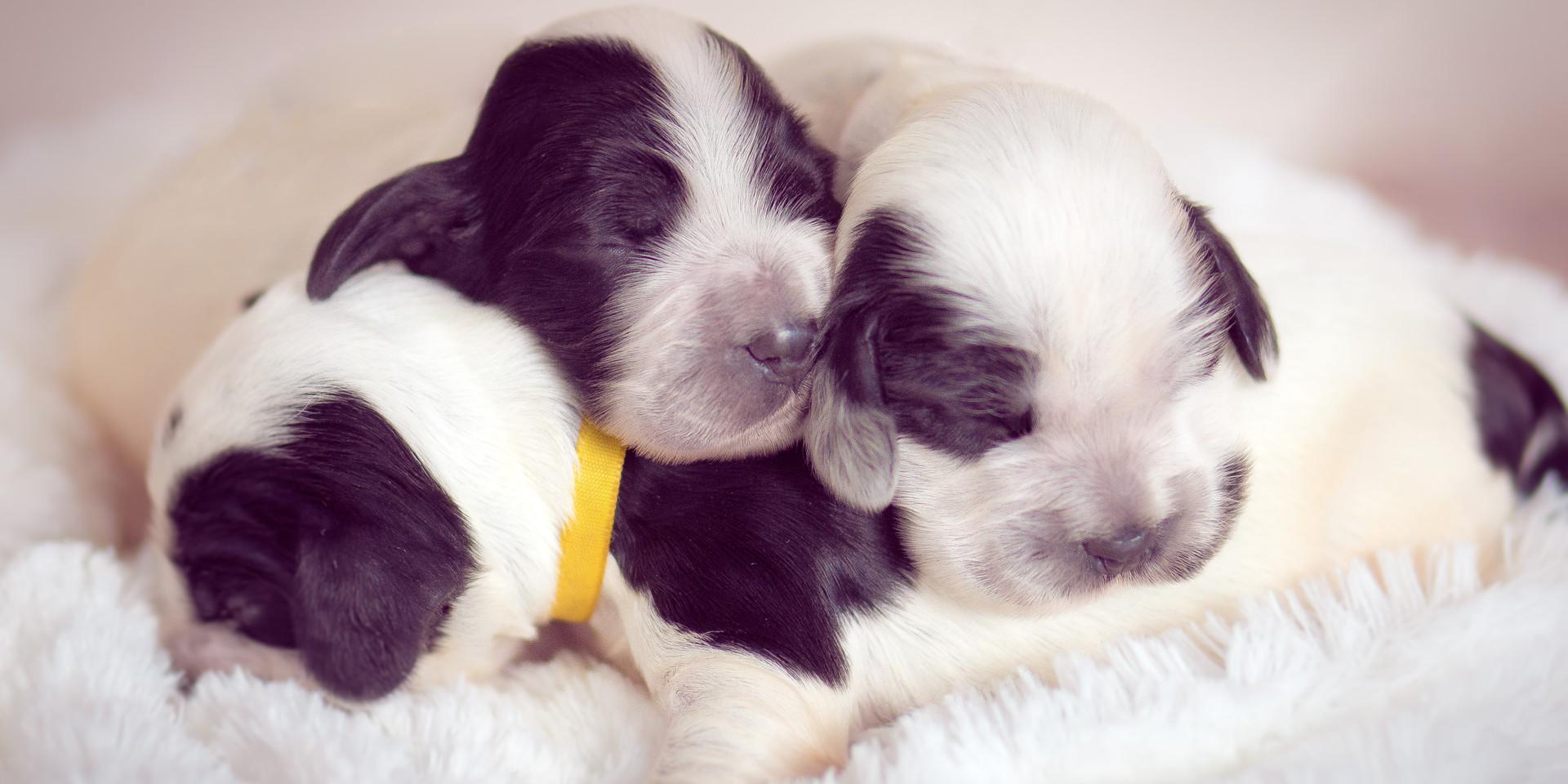 Newborn pet-21.jpg