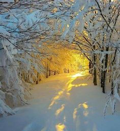 winter sun tunnel.jpg