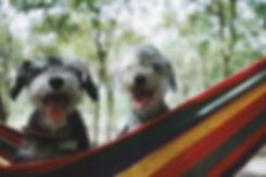 Corryisle Dog Training Fife.jpg