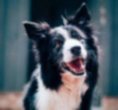 Corryisle Dog Training Fife - Dog Training Classes