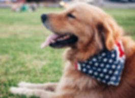 Corryisle Dog Training Fife - Workshops