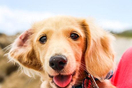Corryisle Dog Training - Fife - Scotland