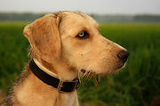 Corryisle Dog Training Fife 1-2-1 Consultations