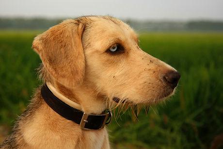 Corryisle Dog Training Fife - 1-2-1 Consultations