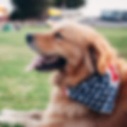 Corryisle Dog Training Fife Workshops