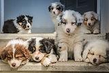 Corryisle Dog Training Fife Puppy Class