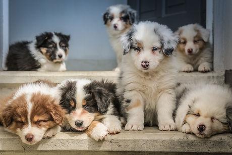 Corryisle Dog Training Fife - Puppy Classes