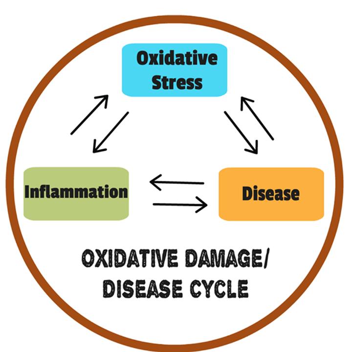 Oxidative Stress Image 3.png
