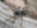 Уреди протв паяци