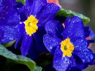 Психология на  цветовете: Син цвят