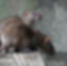 Уреди против плъхове и мишки