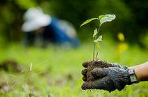 ปลูกต้นไม้ออนไลน์ (สนับสนุนค่าโครงการ)
