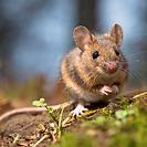 Уреди против плъхлове и мишки