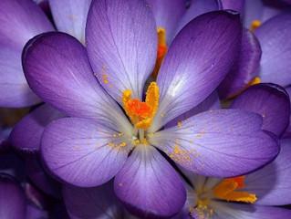 Психология на цветовете: Виолетов цвят (Къпина)